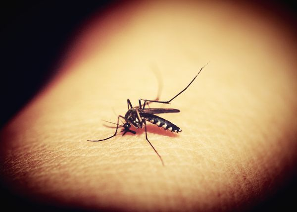 Malaria prevention cannot be allowed to stall during the pandemic