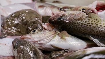 Fishermen in Poland fear for their jobs as cod numbers decline