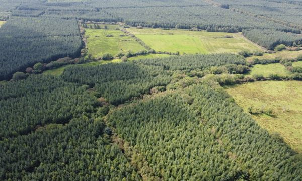 Commercial forest with 'significant volume of maturing timber' on the market