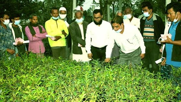 Scientific farming methods stressed for boosting tea production