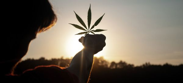 UN commission reclassifies cannabis, no longer considered risky narcotic