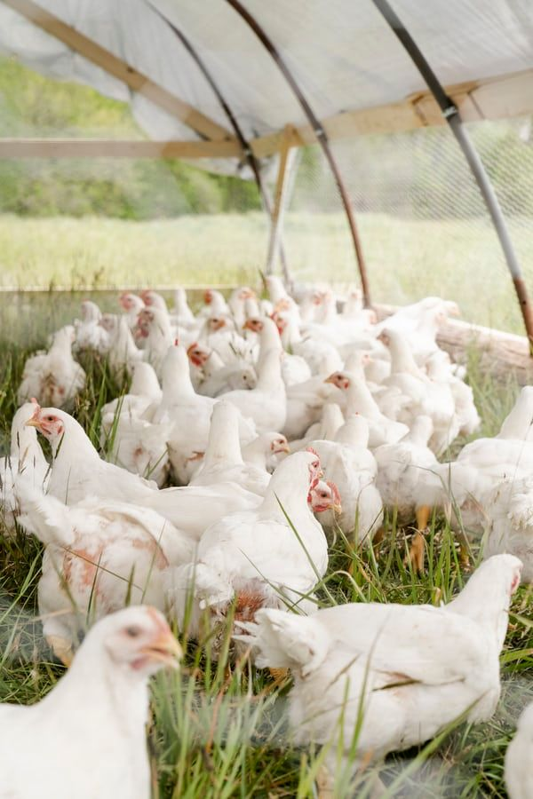 U.S. poultry industry economic impact up 15% in two years